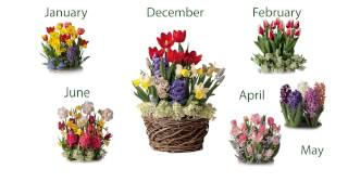 Six Months Of Pre-planted Flower Bulb Gift Gardens  Sku#8221 - Plow & Hearth