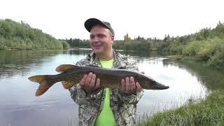 Ведро рыбы за полтора часа / Рыбалка в августе на таежной речке