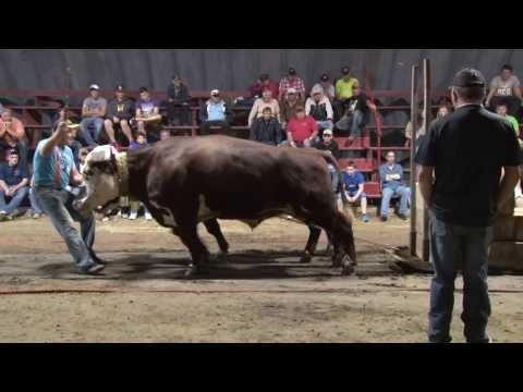 Barrington Ex. Ox Haul Aug. 17 2013