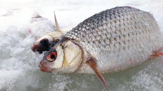 ПРО СОРОЖКУ Зимняя рыбалка 2021 в марте ловля плотвы на мормышку