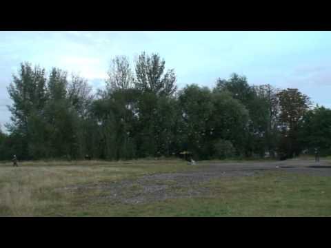 Mitcham Common parakeet roost 4
