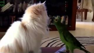 Приколы коты против птиц,в конце ваще супер!!!