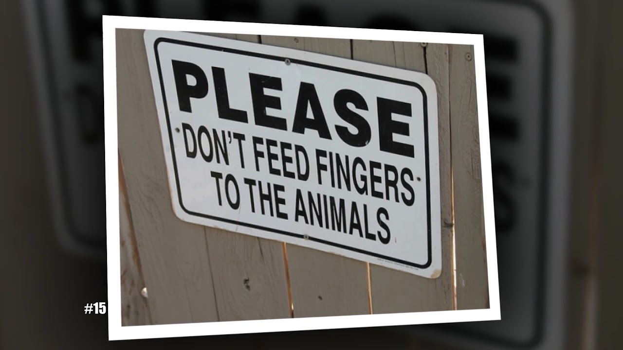 10 funny zoo signs which probably have some incredible stories