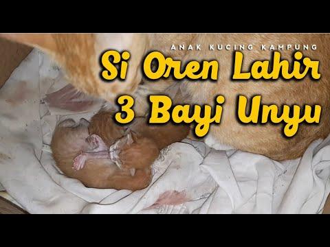 Bayi Kucing Kampung Baru Lahir Makanan Kucing Baru Lahir Youtube