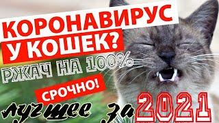 ПРИКОЛЫ С КОШКАМИ...РЖАЧ НА 100%...2021