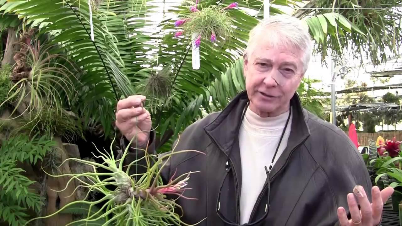 Paul Isley Rainforest Flora Tillandsia Showtime Youtube