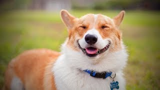 Smiling Dogs 🐶☺ Cute Dog Smiling (Full) [Funny Pets]