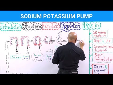 Sodium-Potassium Pump (Na⁺/K⁺-ATPase)