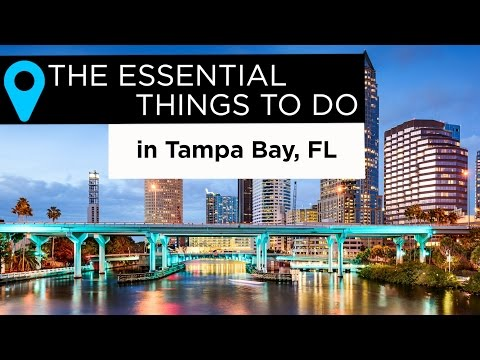 The Essential Things to Do in Tampa Bay, Florida