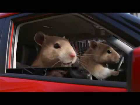 Kia Hamster Commercial >> Kia Soul 2010 Hamster Commercial - YouTube