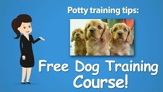 How to Potty Train and Housebreak a Puppy or Dog