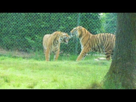 Zoo Safari Park Pombia (Novara)