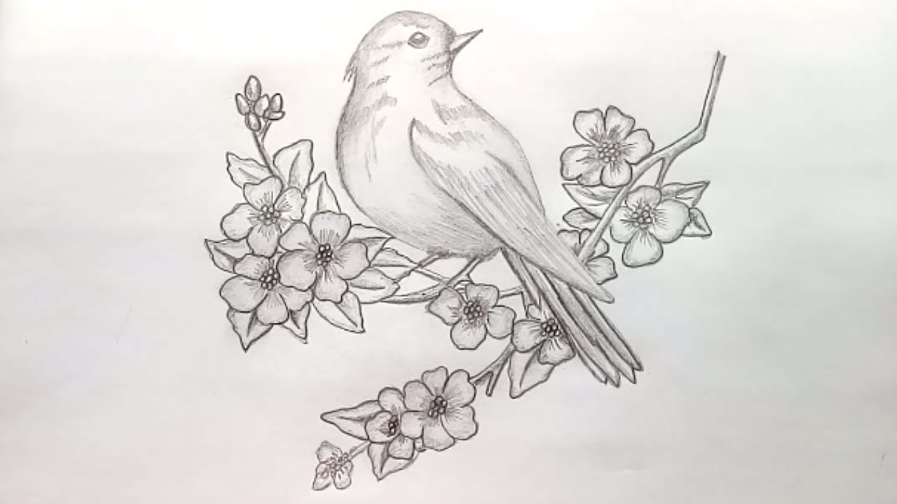 How to draw a bird with pencil sketch step by stepeasy draw