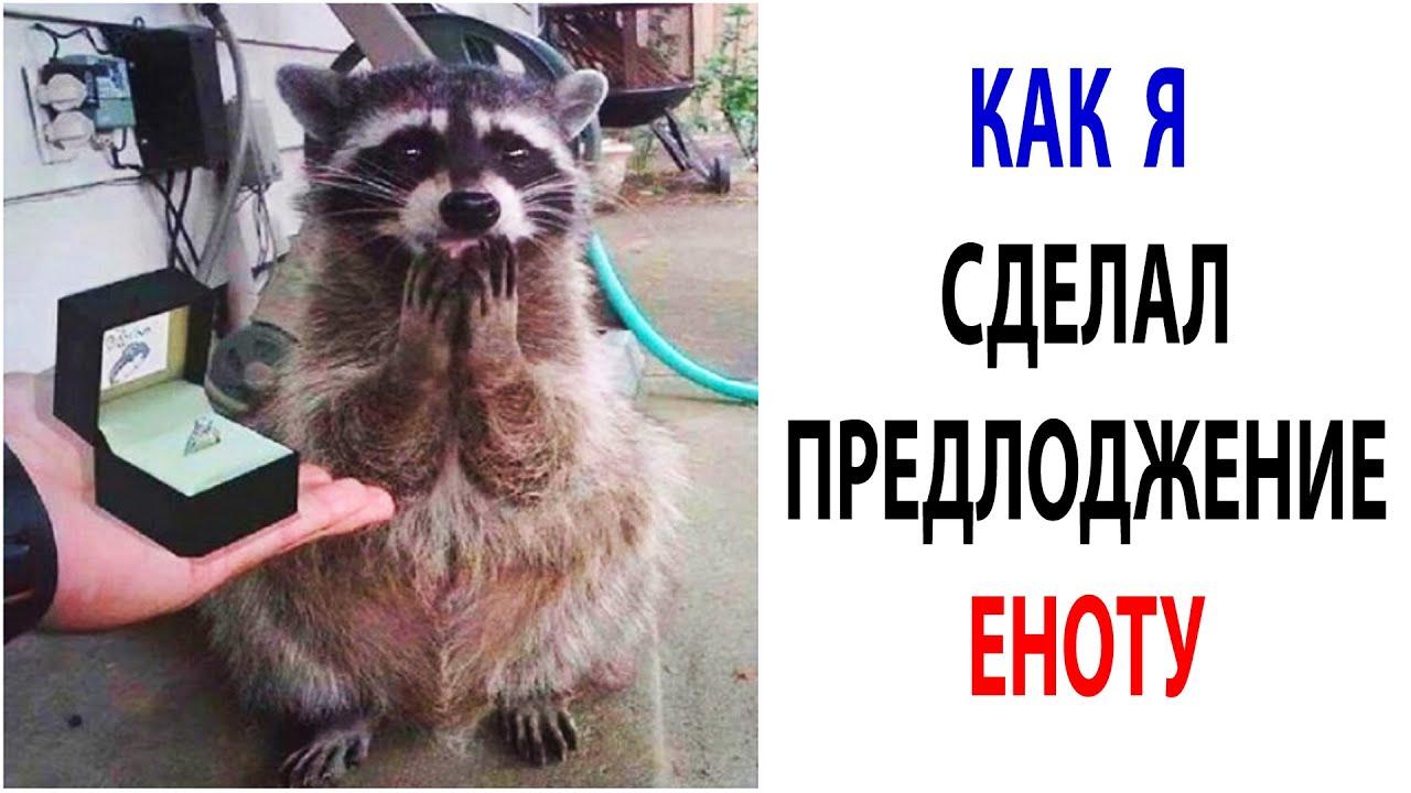 Мемчики и Приколы с Животными 2021  Смешные Мемы с Котами за 14 Октября #shorts
