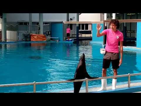 Funny Animal Show | Sea lion Show | Splash Show in Santosa island, Singapore | Funny Animal Seal