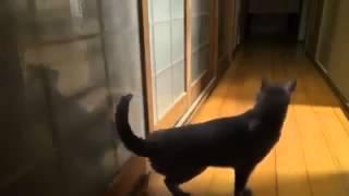 Прикольные кошки Кошка разрушает входную дверь Забавно смотреть!!