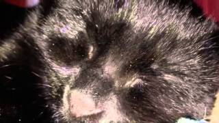 Saving Fluffy (Official Trailer)