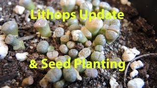 Lithops Update and More Seeds to Plant