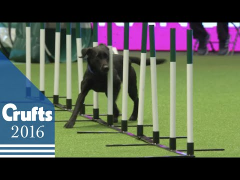 Agility - Crufts Team - Large Final | Crufts 2016
