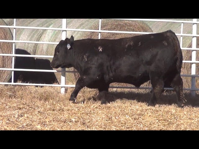 Express Ranches Lot 356