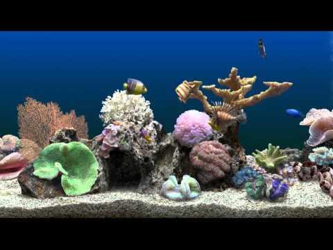 Virtual Aquarium from YouTube · Duration:  1 minutes 19 seconds