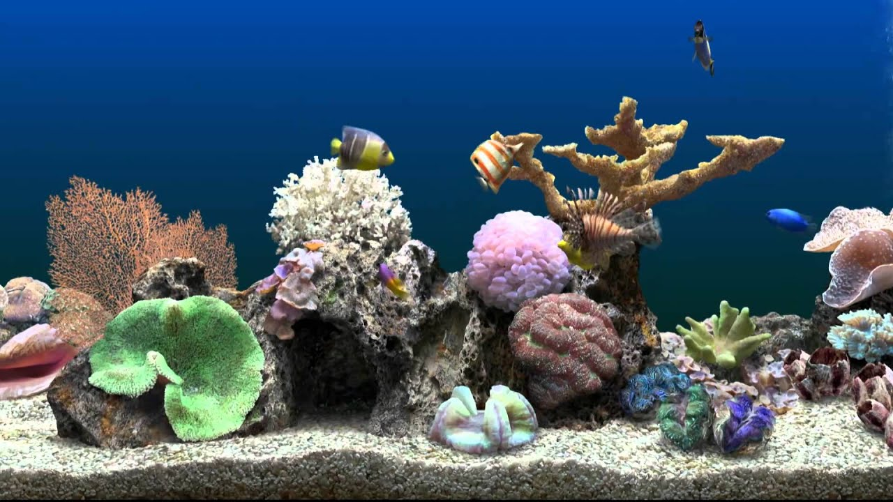 Marine aquarium virtual fishtank youtube for How to keep fish tank clean without changing water