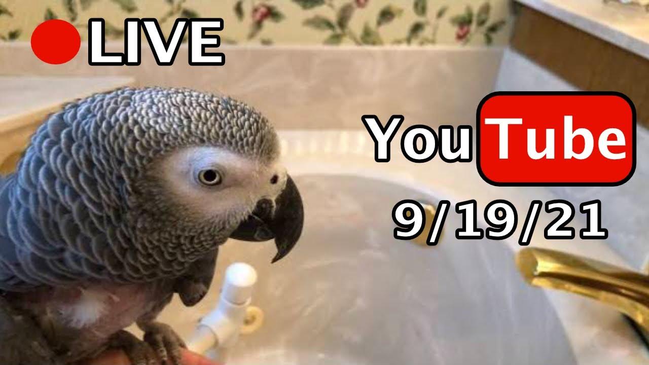 🔴🐦Einstein Parrot LIVE! 9/19/21
