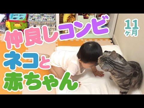 猫と赤ちゃん 仲良しコンビ とひさんの休日【11ヶ月】