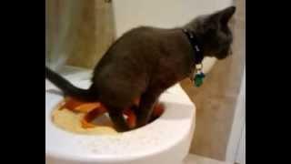 Cat Toilet Training Step 3