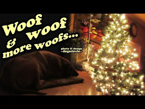 Christmas Dog Video - Barking Dog Sound Videos - Big Dogs - Cute Funny Animals - Jazevox DogsCircle