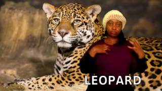 Zimbabwean Sign Language Vocabulary ANIMALS