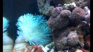 морские рыбки клоуны в баку 0503220663