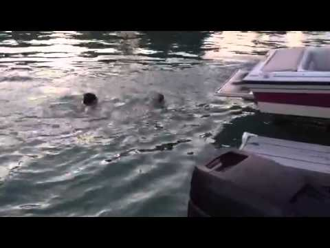 The Swimming Pug