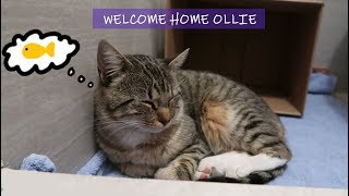 A Stray Cat Followed Me Home | Meet Ollie the Cat