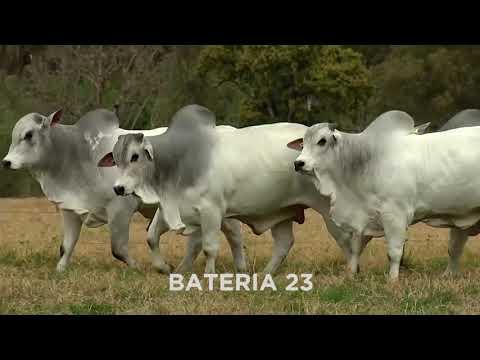 BATERIA 23