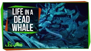 Life Inside a Dead Whale
