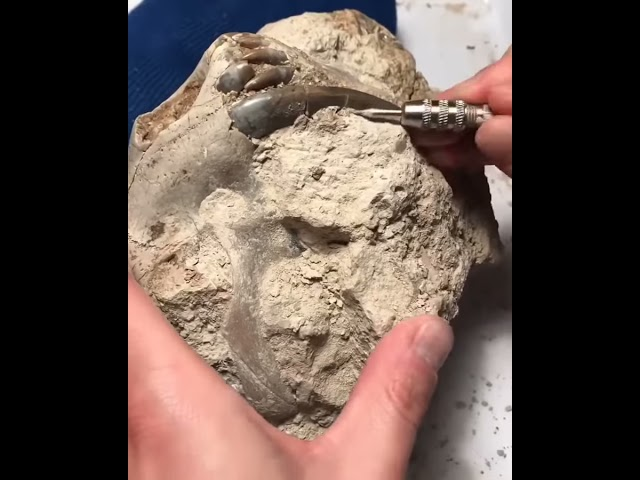 Fossil Preparation