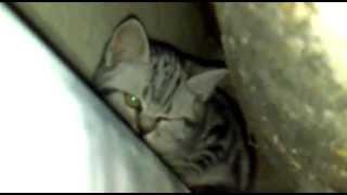 Поиск котёнка в квартире