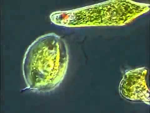 LIFE - From Unicellular to Multicellular Organisms
