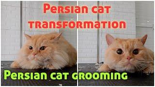 Persian cat grooming|Persian cat transformation|#cutepersiancat|#catlover