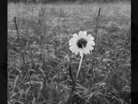 Melissa Etheridge - Un Unexpected Rain