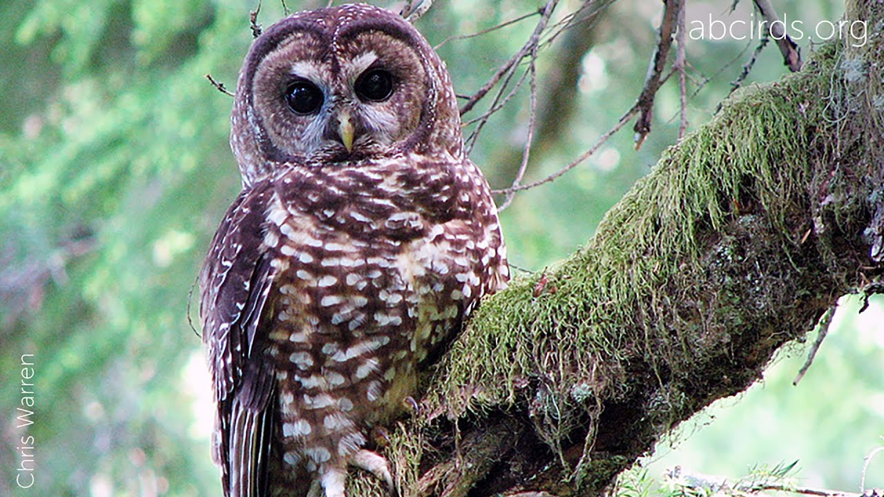 northen spotted owl June 2017 northern spotted owl findings page 2 warranted upon publication of the commission's notice of determination as required by fish and game code section.