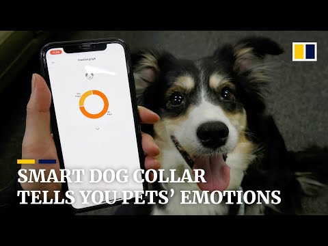 Smart collar expresses how your pets are feeling
