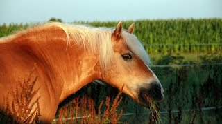 Клип конный спорт (время не пришло)