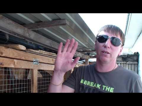 Видео: Инбридинг 2 часть