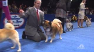The National Dog Show '14