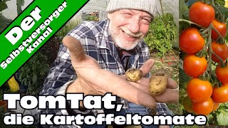 Tomtat, die Kartoffeltomate