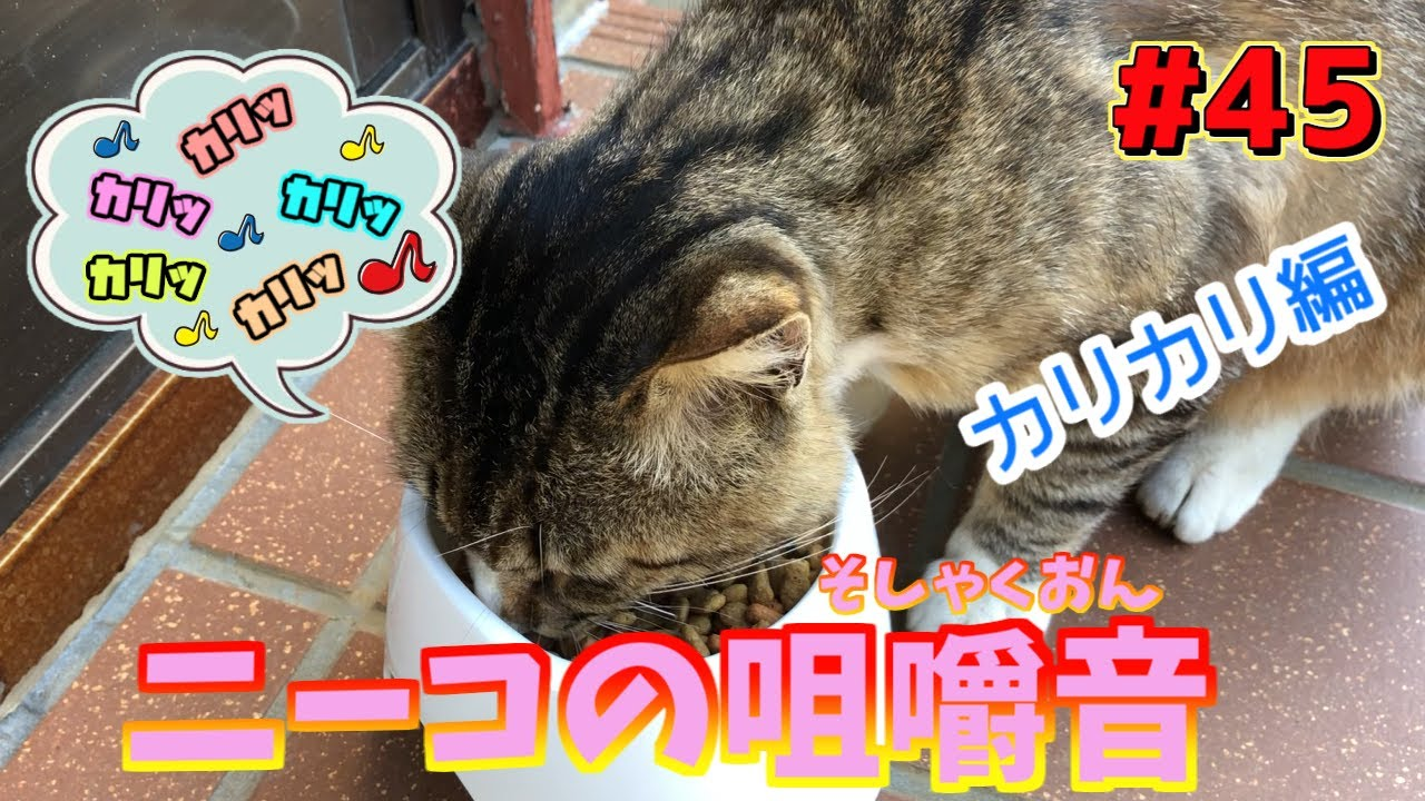 野良猫ニーコが家猫になるまで #45