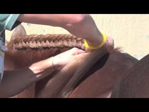 PLAITING / BRAIDING  Of The  MANE -  SPANISH PURE BREED PRE ANDALUSIAN HORSES FOR SALE