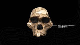 Paleoanthropologist Yohannes Haile-Selassie explains the significance of the discovery
